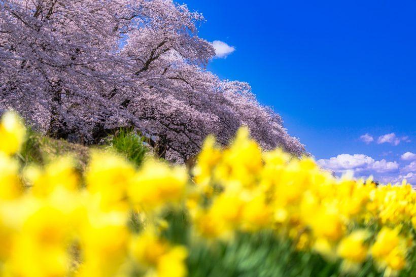 春の環境変化には食事で予防